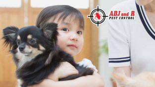 ADJ and R Pest Control…